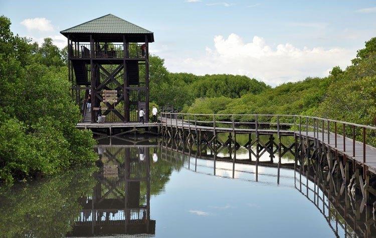 Ekowisata Mangrove Wanasari Tour Alam Yang Mempesona Di